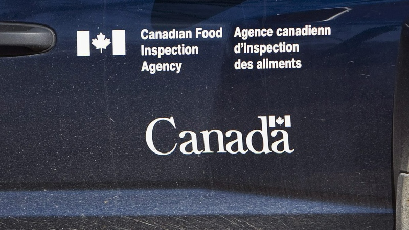 Fergus, Ont., lady fined $25K for illegally importing a total bunch of doses of bovine semen