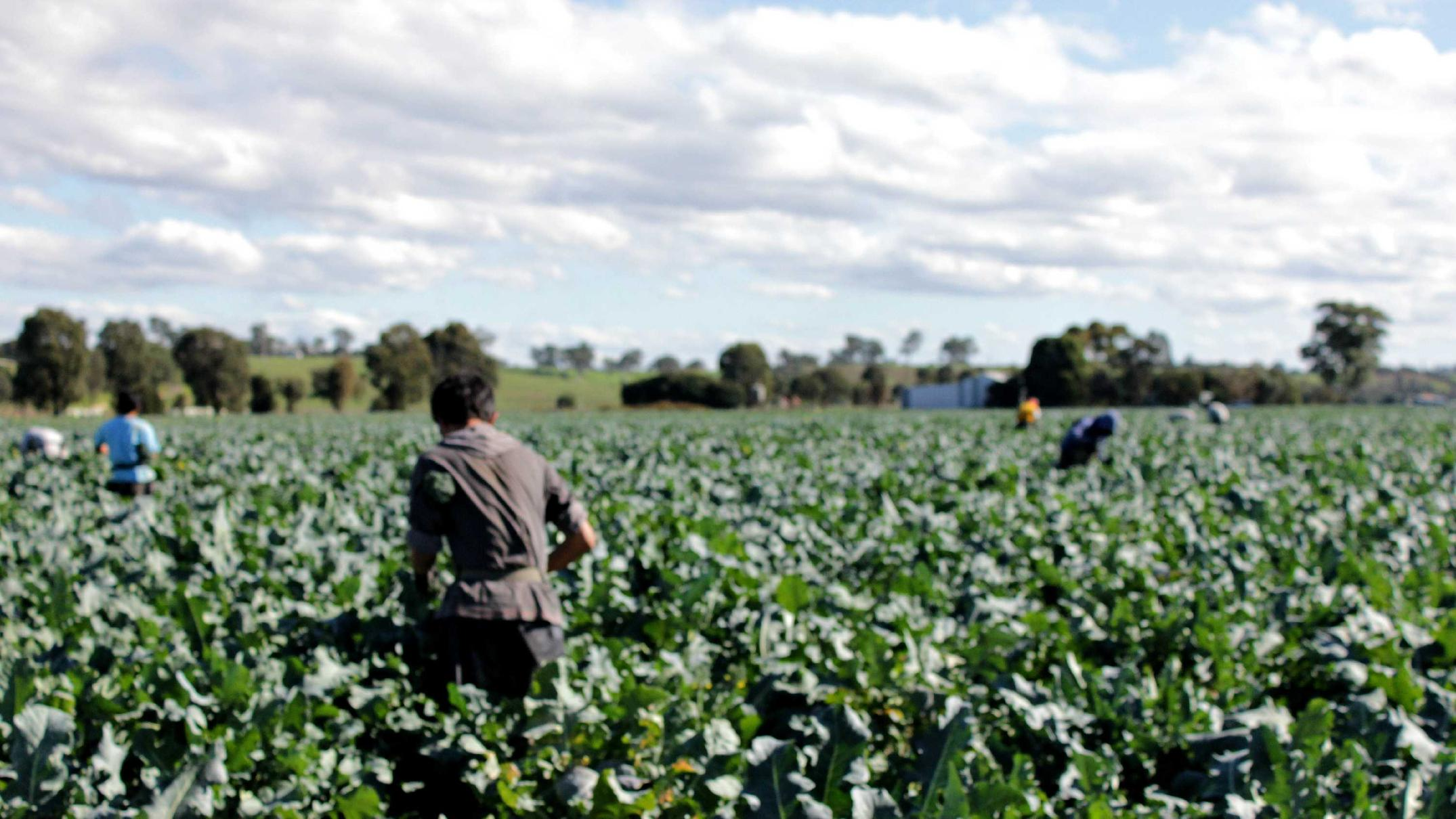 Federal Government considers amnesty for illegal workers