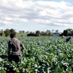 Federal Authorities considers amnesty for unlawful workers