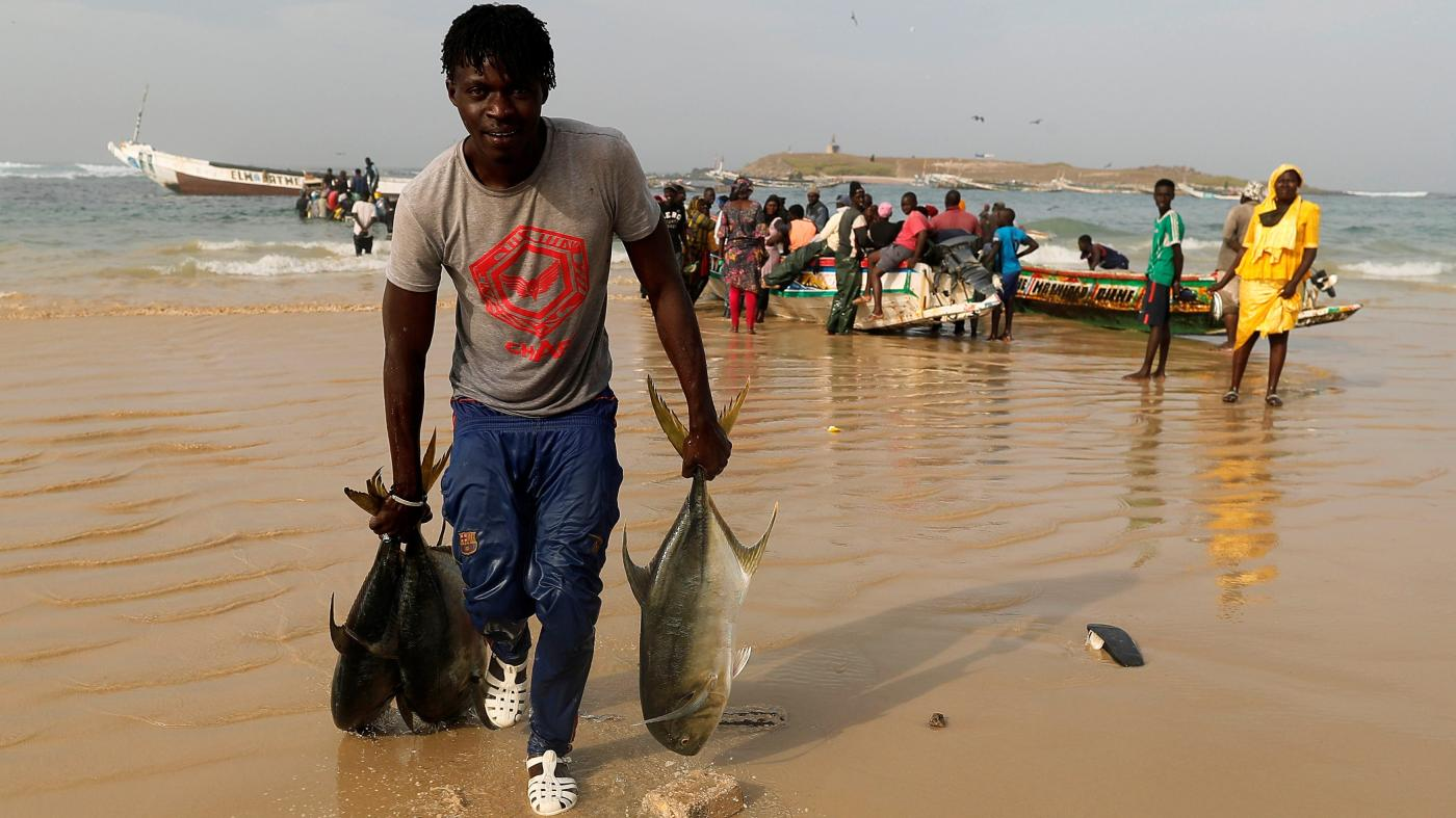 Chinese trawlers with an unlawful fishing represent have been licensed by Senegal