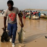 Chinese trawlers with an unlawful fishing fable absorb been licensed by Senegal