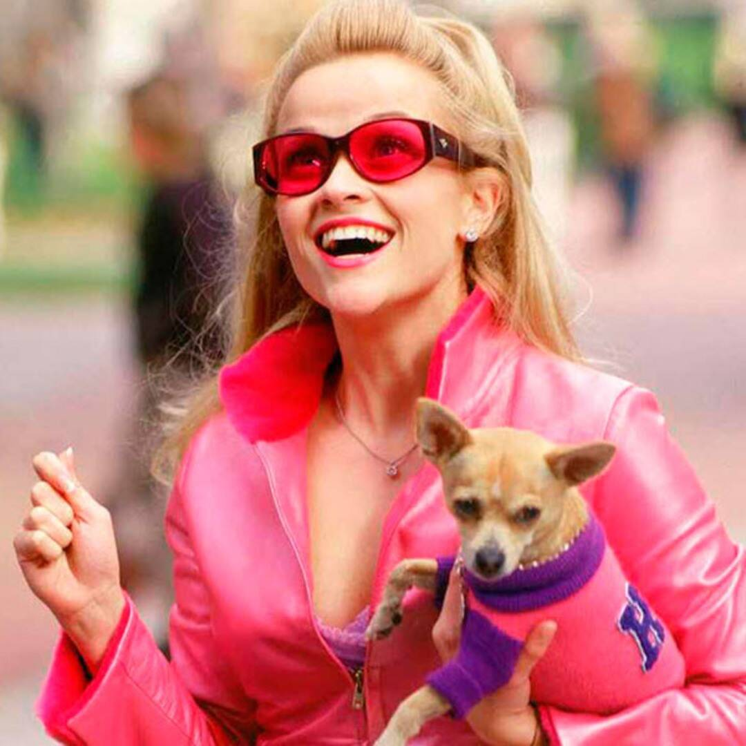 Reese Witherspoon's Legally Blonde 3 Will get a Free up Date: The entire Minute print