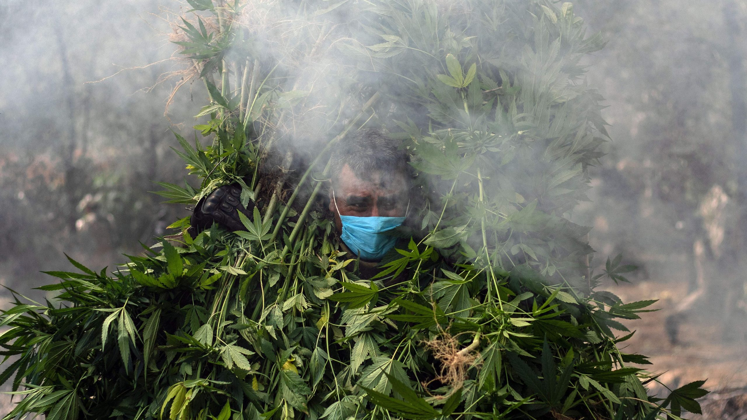 Mexico gambles on legalising hashish