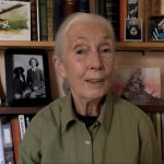 Finish the Illegal Flora and fauna Commerce: Dr Jane Goodall on why wildlife trafficking must discontinuance
