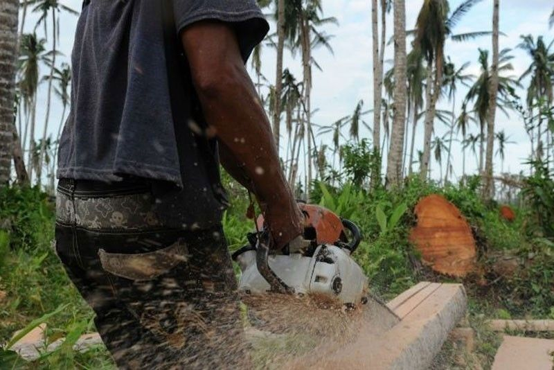DILG: Some mayors fascinated by unlawful logging, mining