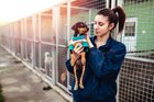 """TIL that in Germany, it's illegal to abolish any animal that is a vertebrate """"without an ethical reason"""" fancy the animal being unwell or a probability to humans. On memoir of of this, all German animal shelters are no-abolish."""