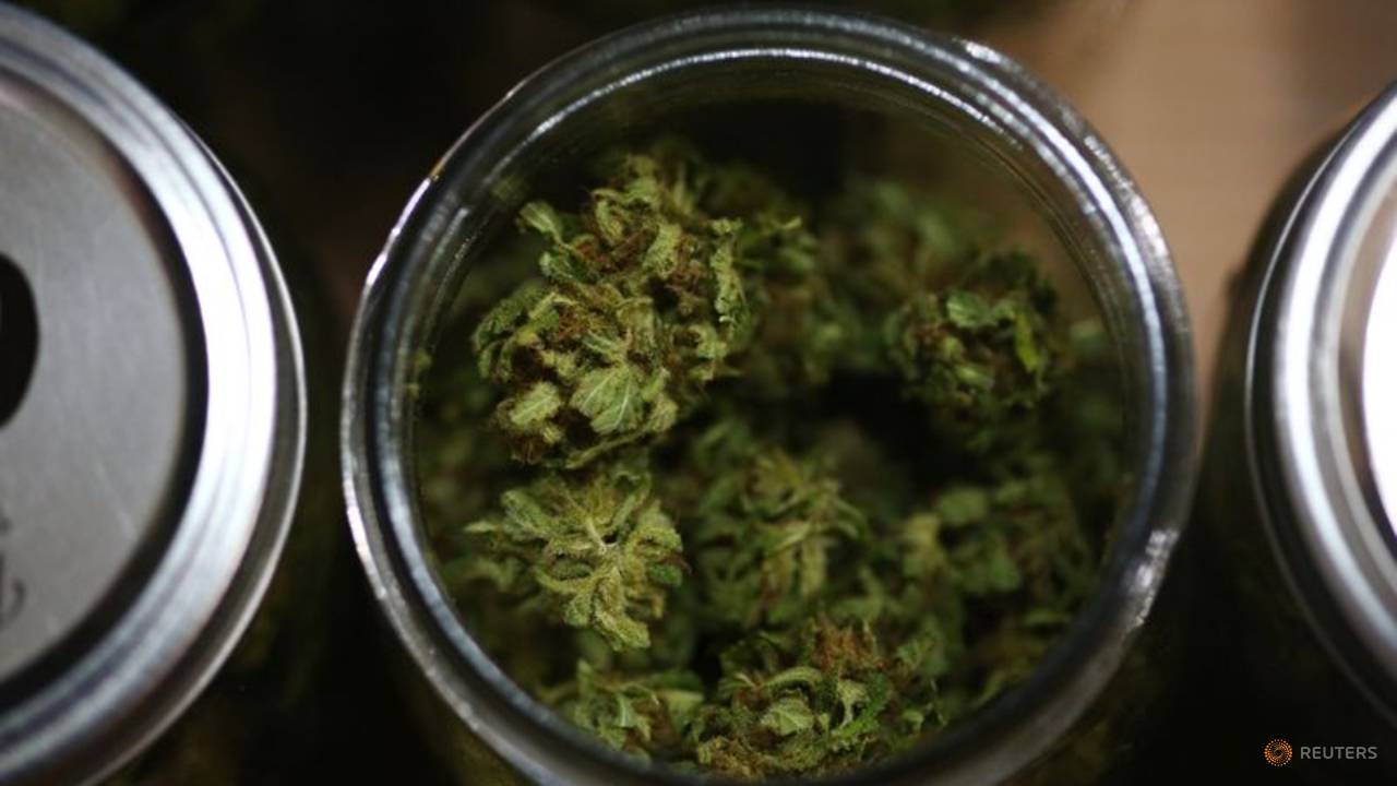 Pot shares excessive as Democrats on brink of controlling US Senate