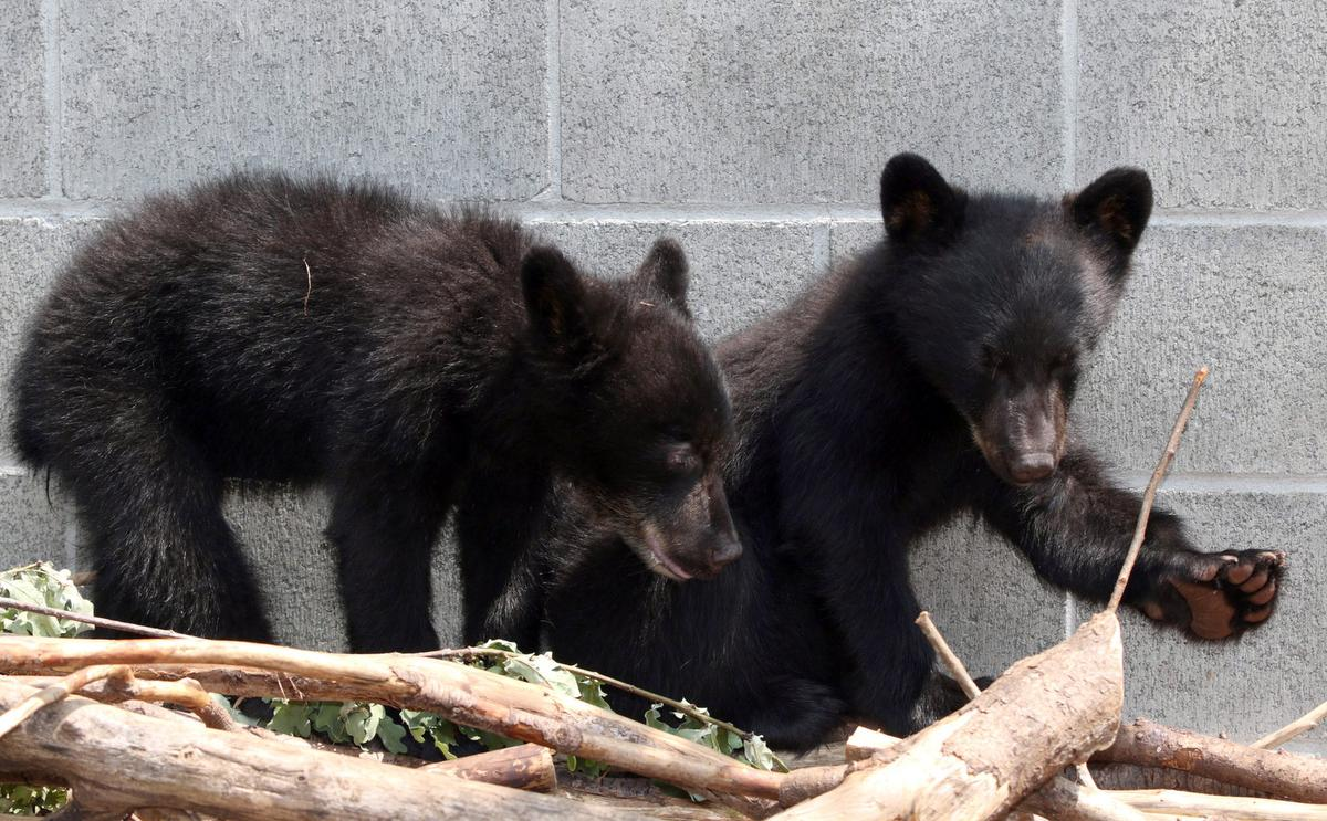 This conservation officer who refused to waste two infant bears won a long upright fight — however the federal government restful won't let him jog abet to work