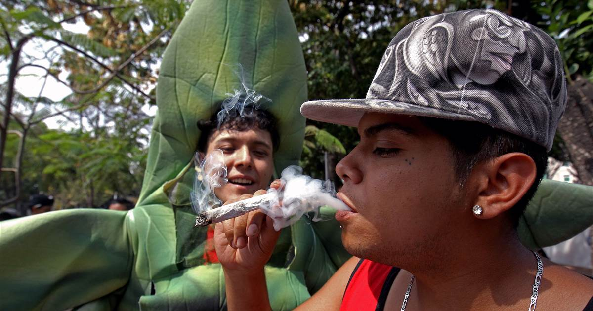 Mexico strikes nearer to changing into the world's excellent lovely hashish market