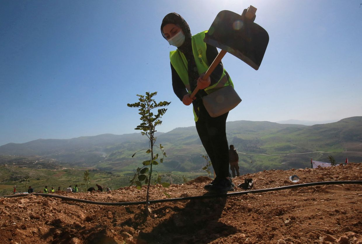 Armed with telephones and seeds, jobless Kenyans address unlawful logging